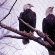 Pair o\' Eagles